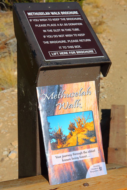 IMG_0374 Guide of Methuselah Walk