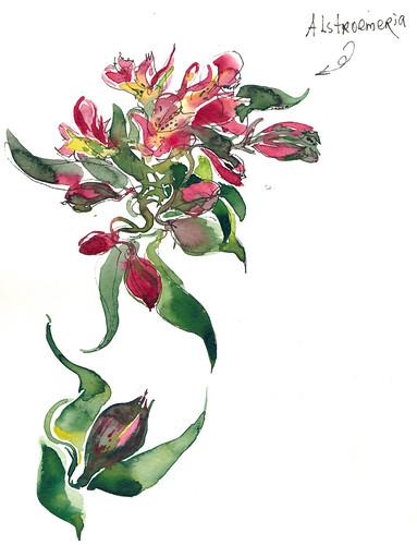 Sketchbook #99: Alstroemeria