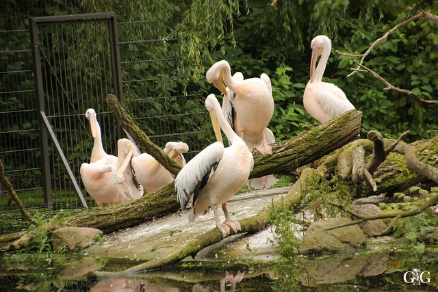 Zoo Rostock 2. Teil 20.08.2016105