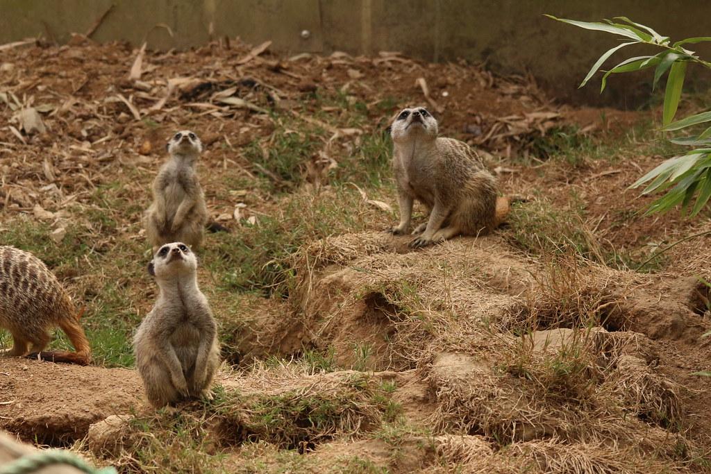 Zoo de la Boissère du Doré 29698940775_373eee8277_b