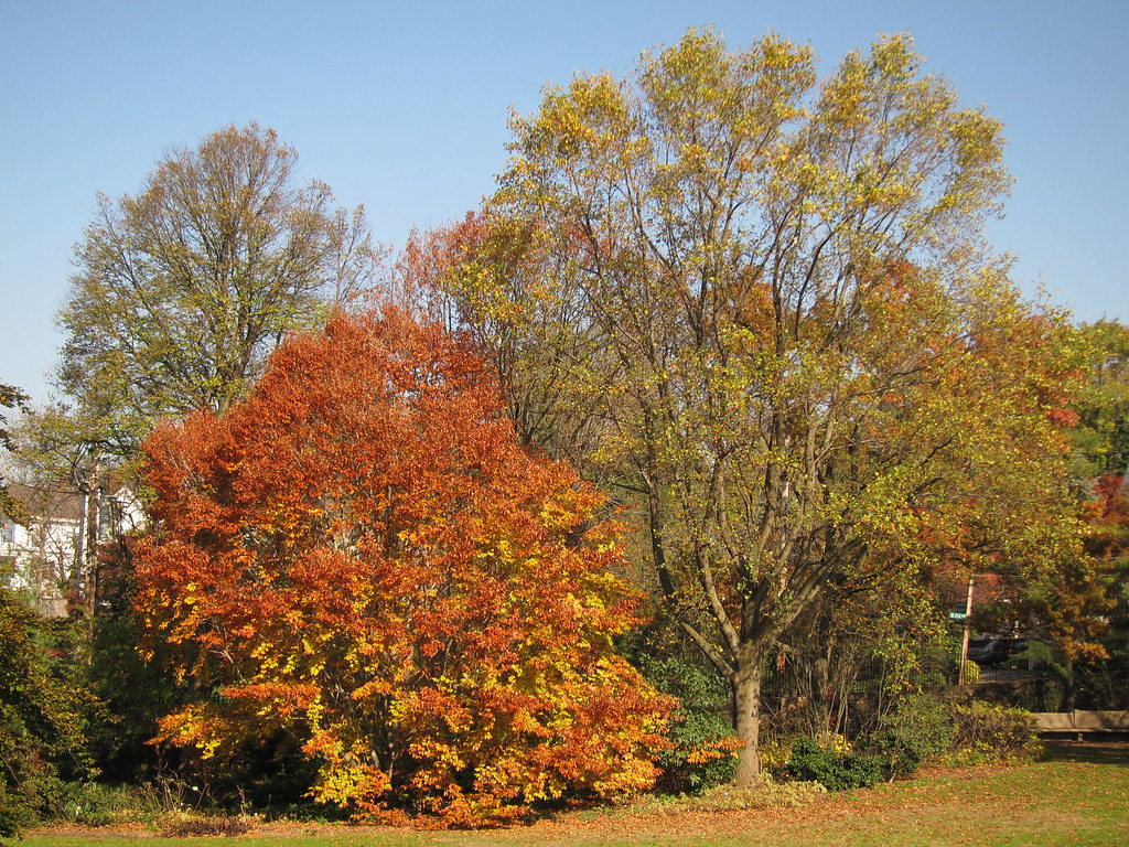 Wave Hill in Autumn 02