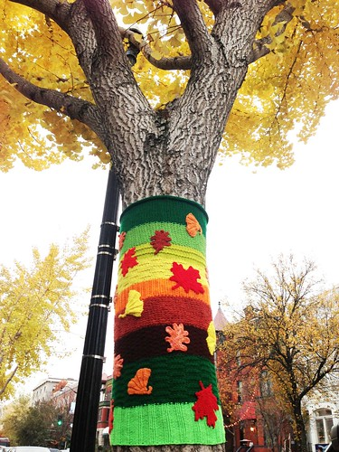 fall yarn bomb | by ekelly80