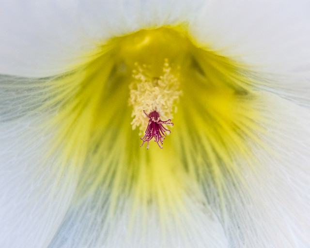 flower closeup