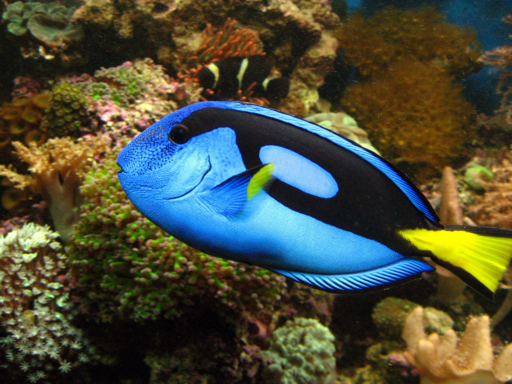 Photos of vibrant fish colors from a saltwater aquarium for Saltwater reef fish