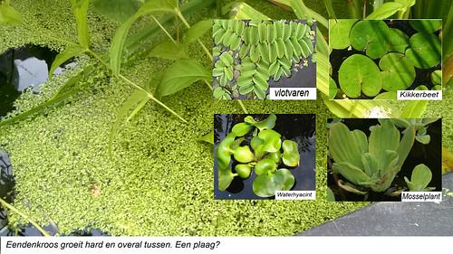6 Drijfplanten