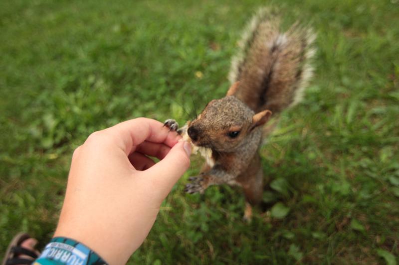 eichhörnchen füttern montreal mont royal park