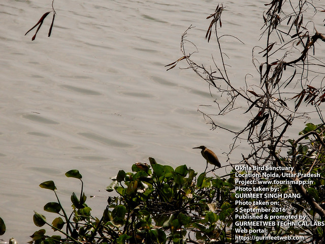 Okhla Bird Sanctuary, Noida, Uttar Pradesh, India, Photo 61