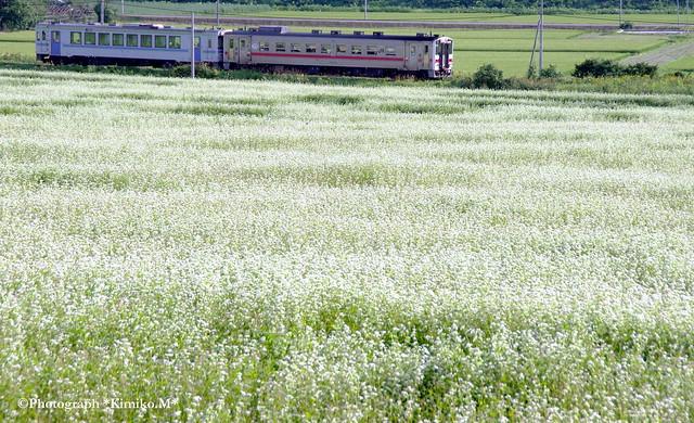 蕎麦畑沿線