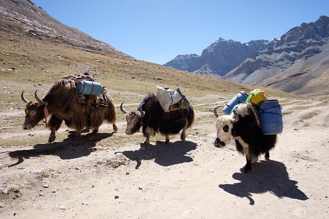 Mt. Kailash Trek-9