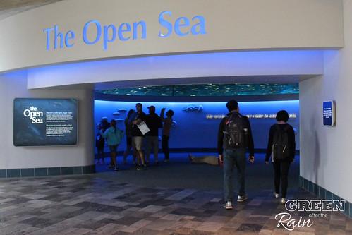 160703c Deep Sea _01