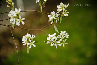 Hanging Whites | by Kevin Vyse Photography