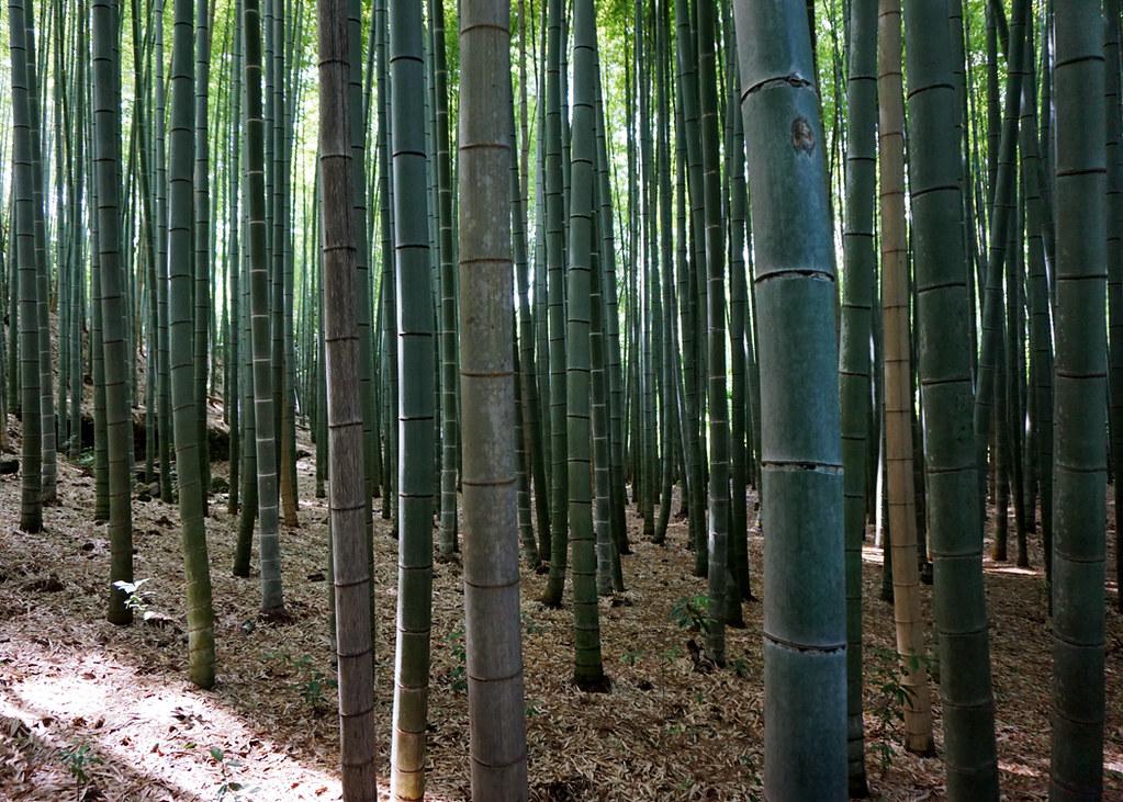 bambu11