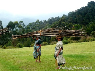 4. Women, forest, firewood, Kodaikanal | by binduroy22