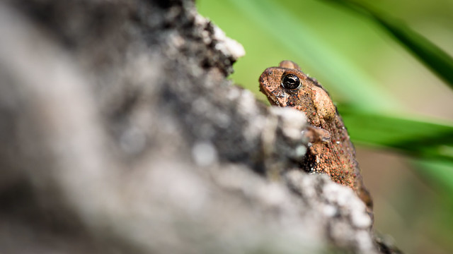 2016 08 19 Toad