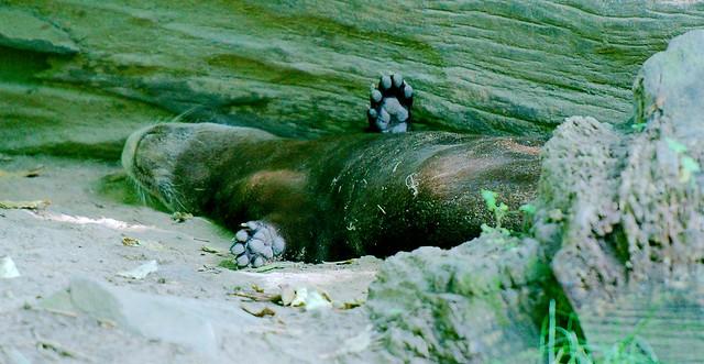 Otter_1