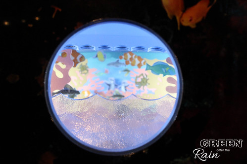 160703d Splash Zone and Penguins _22
