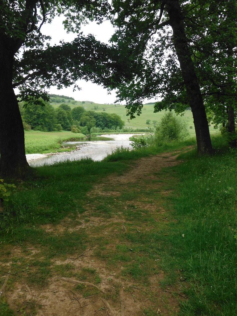 Grass Woods 10