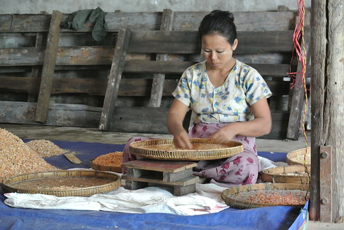 Sorting dried shrimp in a processing in Pyapon, Myanmar. Photo by Ranjitha Puskur, 2012.