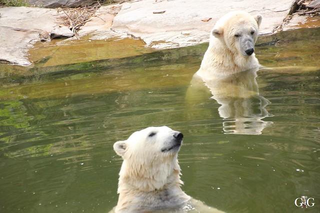 Besuch Tierpark Friedrichsfelde 20.07.201637