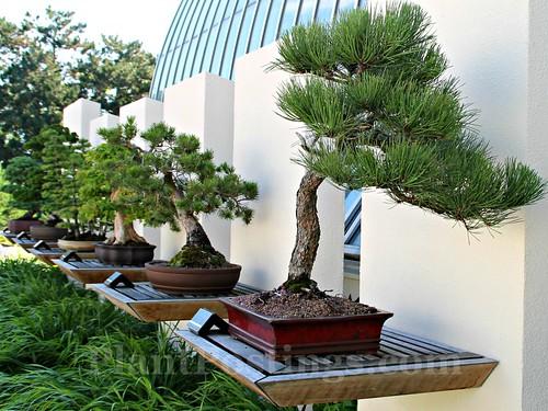 2 bonsai