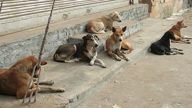 0001street-dogs2