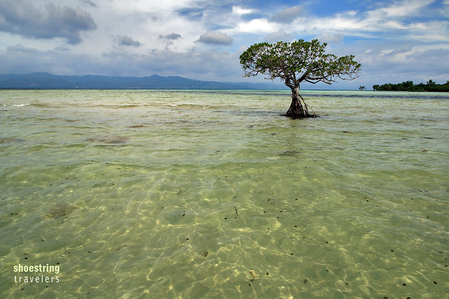 lone mangrove tree at high tide, Yang-In sandbar, Cagbalete Island