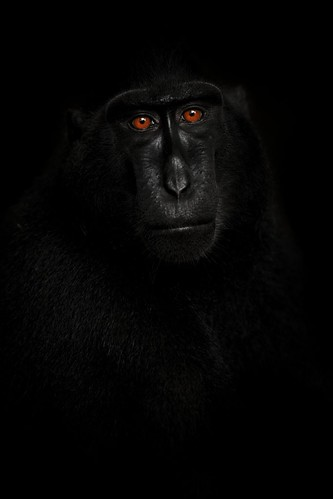 Reflection in Black ©Petr Bambousek