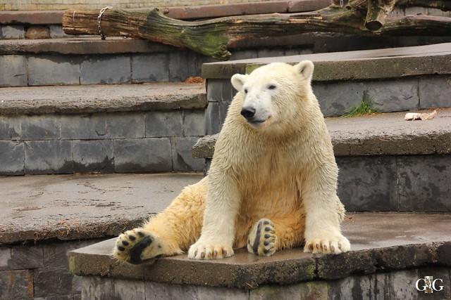 Zoo Rostock 02.10.201633