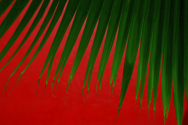 Palm leaves against a red wall in Mexico