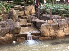 広尾公園のじゃぶじゃぶ池 2016.7.18