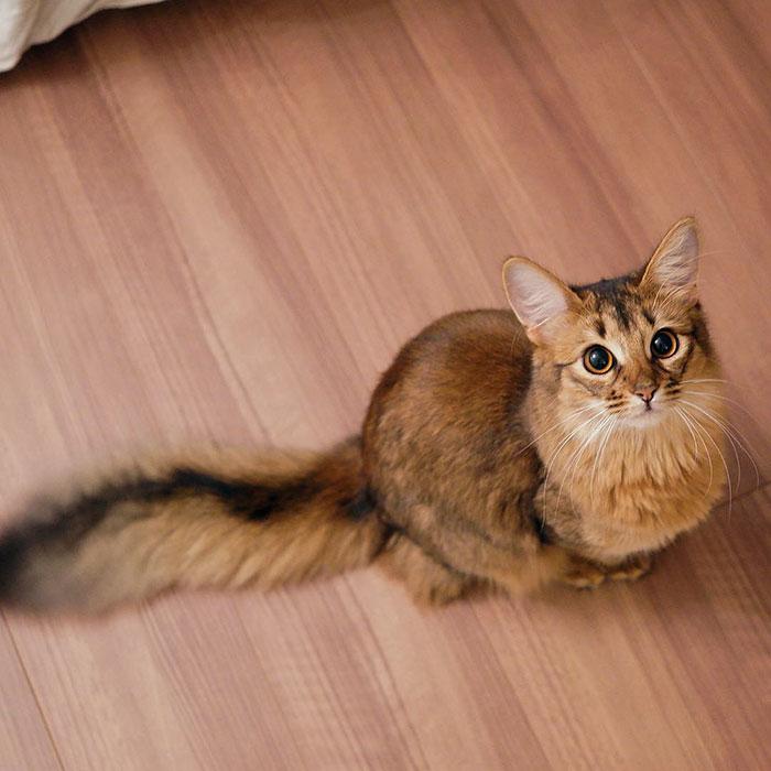 Шикарнейшай кошка с окрасом, как у лисы. - ПоЗиТиФфЧиК - сайт позитивного настроения!