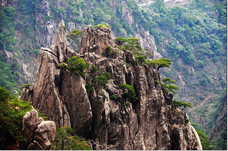 黃山的奇松怪石 6