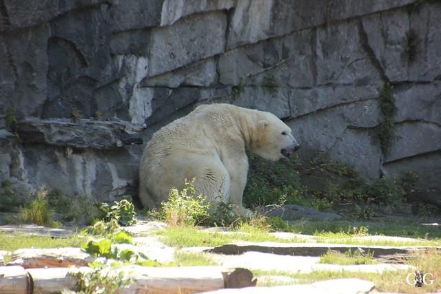 Besuch Tierpark Friedrichsfelde 07.08.16116
