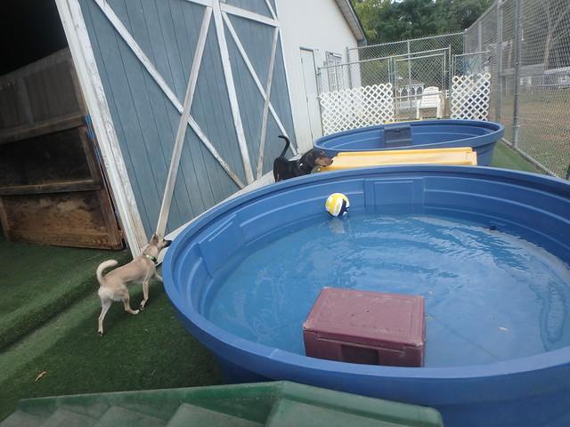 09/11/16 Group Swim!!!