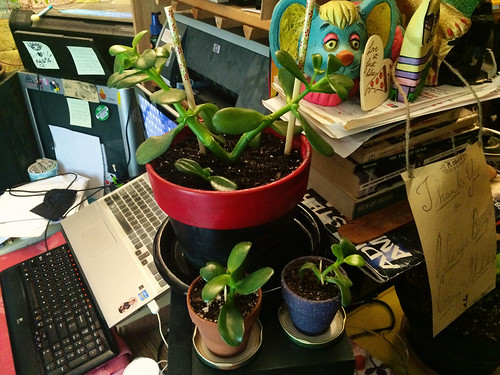 Jade Plant Surgery (September 23 2015)