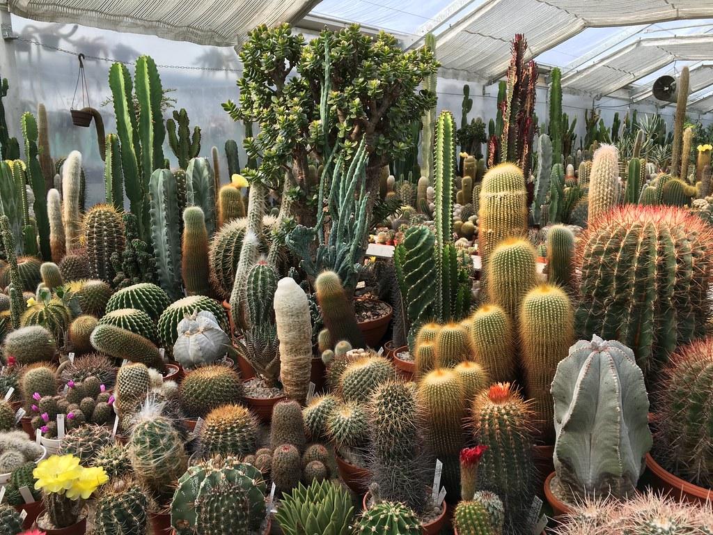 Ha-Ka-Flor - cactus et plantes grasses 27773666863_dc0db89abe_b