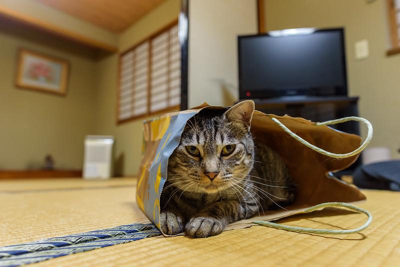 005@Pension himitsukichi