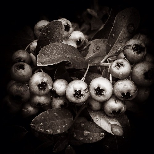 berries | by Jenny Modesitt