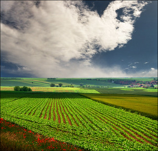 "Summer fields  (much better in original size-press ""L"") 