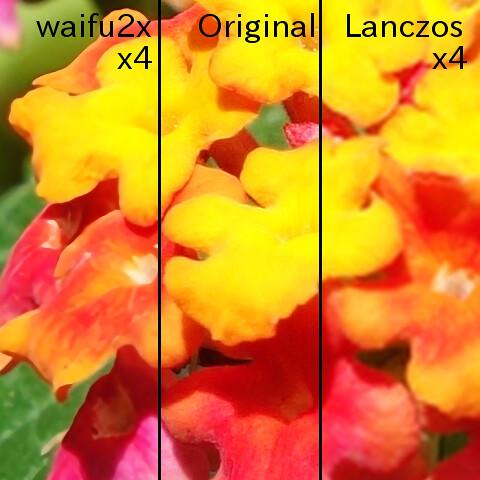 """Lantana_Comparison_2_Text """"waifu2x"""" で2回2倍に拡大した画像と元の画像とLanczosで2回2倍に拡大した画像との比較画像。ランタナの花の写真を横に3等分して比較している。"""