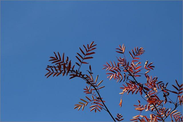 Der Herbst ist Rot