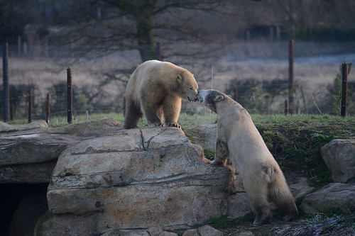 Nobby and Nissan at Yorkshire Wildlife Park