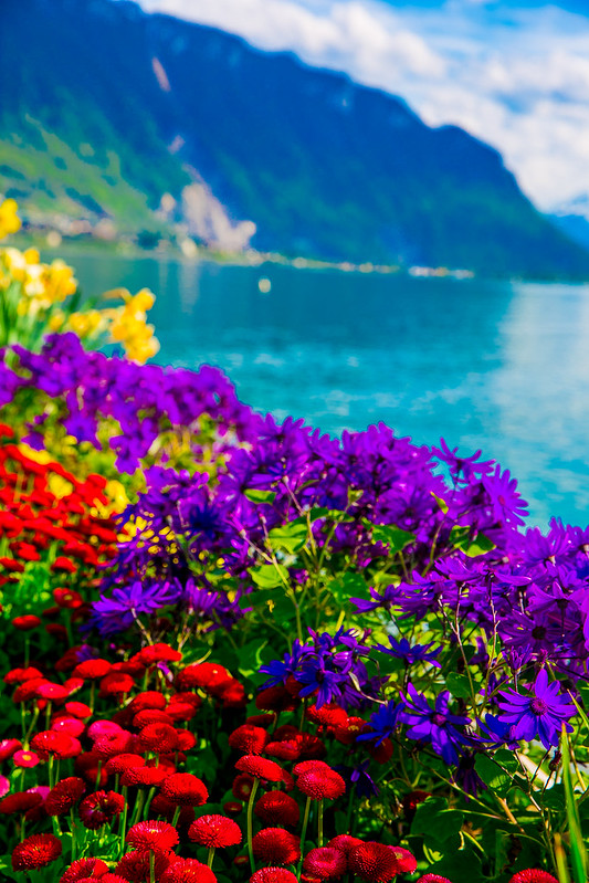 flowers, Lake Geneva, travel, vacation, Europe, water, beautiful