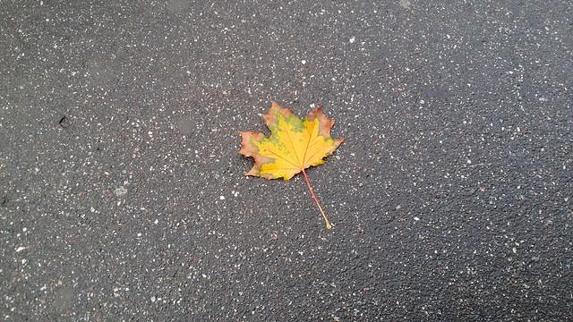 Одинокий листик, осень уже совсем рядом...