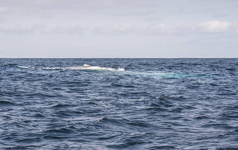 Balea urdina euskal kostaldean