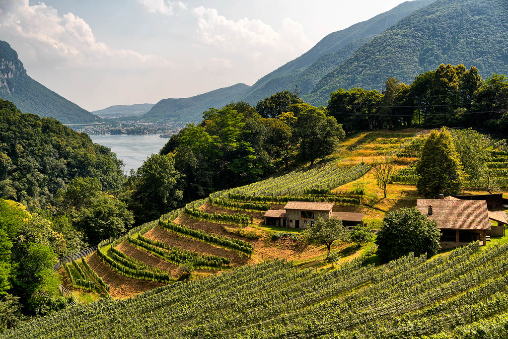 Vineyard near Arogno (Ticino, Switzerland)