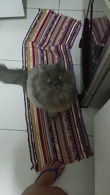 Gato Fumaça