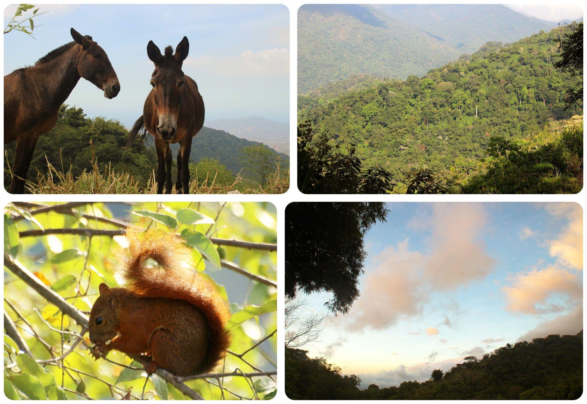 Minca Colombia Sierra Nevada