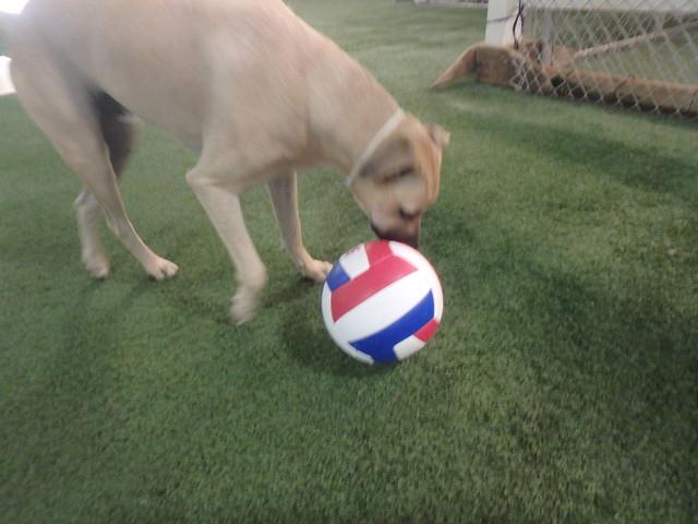 09/13/16 Soccer Play (: