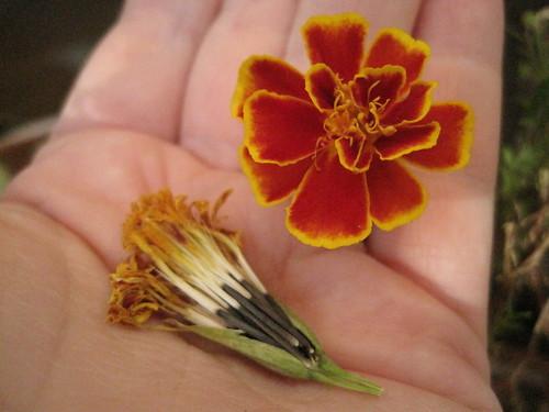 Taget &semillas
